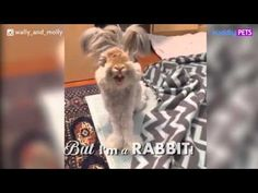 Wally - Rabbit With The Biggest Wing Like Ears - YouTube