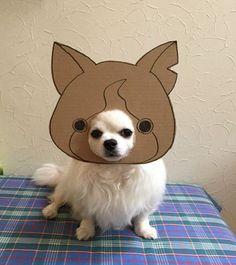 Retrato: Semba crea para su perro Chihuahua, disfraces de Cartón