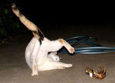 #интересное  Коты такие коты (49 фото)   Прикольные котейки :)       далее по ссылке http://playserver.net/?p=141422