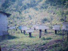O apiário