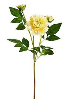 Sweet yellow dahlia fake flower gives your DIY wedding floral bouquets a soft, delicate look. It's also the perfect addition to any pastel arrangement. Soft Yellow Tall x Bloom Silk with Wired Stems Shop Orange & Yellow Artificial Flowers Diy Wedding Theme, Wedding Flower Decorations, Floral Wedding, Wedding Flowers, Fake Flowers, Dahlia Flowers, Artificial Flowers, Silk Flowers, Floral Bouquets