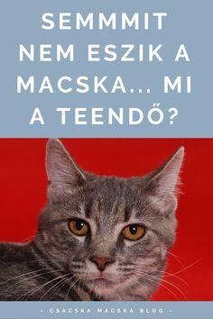 Macska | Macska képek | Macskák és kiscicák | Macska ház | Cicák | Macskás idézetek | Macskás viccek | Macskás rajzok | Macskás képek | Cicás képek |  Macska idézetek | Macska idézet | Macska illusztráció | Macska itató | Idézetek macska | Macskás idézetek | Cica idézet | Cica idezetek | Cicás idézetek magyarul | Kismacska | Kiscica | Kiscicák | Kiscicás képek | Kiscica sweets | Kiscicás képek | Macskatartás | Cicatartás | Macska etetés | Cica etetés | Macska nem eszik | Cica nem eszik Cats, Movie Posters, Animals, Gatos, Animais, Animales, Animaux, Animal Books, Animal