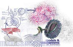 Models & Mechanisms of Diseases