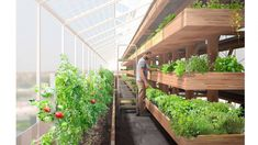 Agriculture meets architecture in France's urban farm tower | Design Indaba