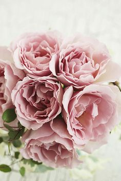 Rose by mellow stuff on flickr