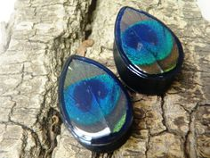 Teardrop, peacock feather plugs