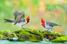~ Angry Birds - Are you angry ~ by FuYi Chen on 500px