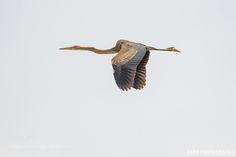 Flying by interdy #animals #animal #pet #pets #animales #animallovers #photooftheday #amazing #picoftheday