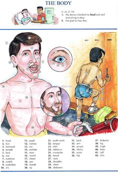 64 - THE BODY A - Picture Dictionary - English Study, explanations, free exercises, speaking, listening, grammar lessons, reading, writing, vocabulary, dictionary and teaching materials