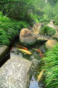japanese garden with koi pond