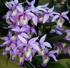 Beautiful Orchids and the color, too!