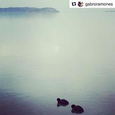 #Repost @gabroramones  Passeggiata pre-lavorativa  #prework#trasimenolake#tranquillità
