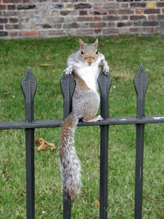 Squirrel Hilarious And Videos On Pinterest