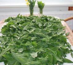 Medvedí cesnak do zásoby (fotorecept) - obrázok 3 Korn, Parsley, Celery, Spinach, Food And Drink, Cooking Recipes, Herbs, Vegetables, Europe