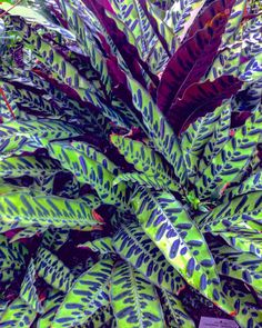 Leaf colorful