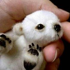 @ANIMALSPLUS go follow my other account! It will be full of cute animals daily! @animalsplus @animalsplus @animalsplus @animalsplus 😍 #photooftheday #pet #FF #animals #dog