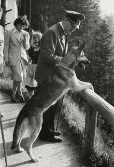 Adolf Hitler and his favorite canine Blondie. He poisoned her just before he and his wife Eva Braun committed suicide on April World History, World War Ii, Photos Rares, German Soldiers Ww2, Military Working Dogs, Germany Ww2, War Dogs, Rare Photos, Vintage Photographs