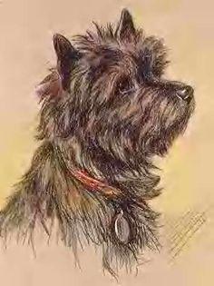 Cairn terrier. Love it.