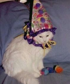 Funny Animals, Cute Animals, Cat Hat, Oui Oui, Cat Memes, Cool Cats, Clowns, Kittens, Creatures