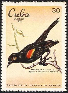 Red-shouldered Blackbird stamps - mainly images - gallery format