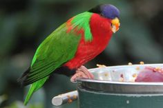Beautiful, colorful bird from Hummingbird Haven in San Diego Zoo  |  2929 Zoo Drive, San Diego,