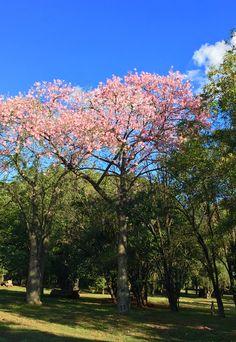 Jardín botánico de Asunción