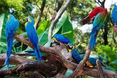 Ecuadorian Jungle - Buscar con Google