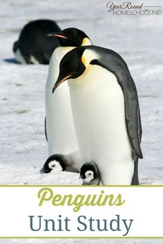 Penguins Unit Study - Year Round Homeschooling