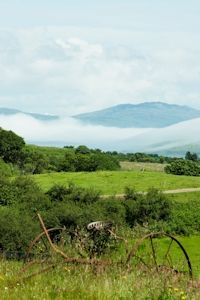 Isle of Mull Cheese, Home Page Teacher Resources, Cheese, Country Roads