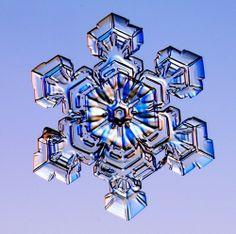 Christmas Photo: Real Snowflakes!