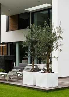 nl villa gardens minimalist garden with flats with modern villa … - Innen Garten - Eng Front Gardens, Outdoor Gardens, Outdoor Spaces, Outdoor Living, Outdoor Decor, Olivier En Pot, Luxury Homes Exterior, Minimalist Garden, Rooftop Garden
