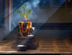 Tulisi | so lovely. Tulasi Krishna Preyasi Namo Namah…