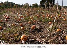 Ticonderoga Farms in Autumn, Pumpkins and Hayrides