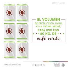 El volumen de producción anual es de 350 mil sacos, cada uno con 60 KG, de café verde. SAGARPA SAGARPAMX #MéxicoSiembraÉxito
