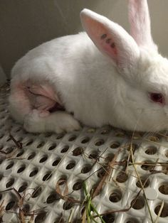 University of Pittsburgh laboratories force animals like rabbits, monkeys and mice to live a life of neglect and pain, but you can help.