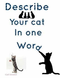 Is it possible to describe your cat in one word??