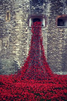 'Blood Swept Lands and Seas of Red' is the installation created for the Tower of London in honor of Remembrance Day tomorrow.  Tons of ceramic poppies were placed for remembrance creating an awe inspiring view in London.