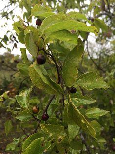 dwarf fruit trees fruit jokes