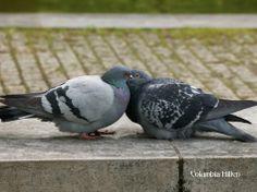 Birds do it Hands, Romantic, Pockets, Group, Type, Frame, Link, Blog, Picture Frame