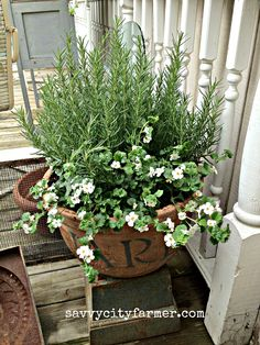 bacopa and rosemary - nice companion plantings Garden Inspiration, Garden Containers, Plants, White Flowers, Planting Flowers, Trailing Flowers, Flowers, Outdoor Herb Garden, Garden Planter Boxes