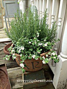 bacopa ... my white flower of choice!  savvycityfarmer.com