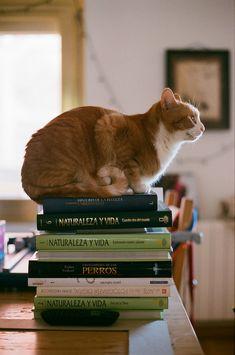 Book read cats.