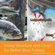 Understand how bass use structure and cover in order to be more successful at bass fishing. Structure and cover are very important in being able to find more bass.