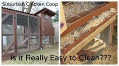 """Is the """"Easy-To-Clean"""" Suburban Chicken Coop Really Easy to Clean? ~ Simple Suburban Living"""