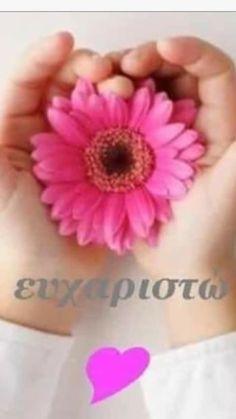 Anastasia, Floral, Flowers, Flower