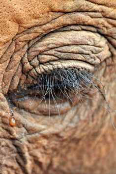 An Elephant Tear ❤ by Ashwati Vipin -- National Geographic Your Shot. Poaching ring stopped which killed pilot Roger Gower RIP ❤ http://news.nationalgeographic.com/2016/02/160208-roger-gower-poachers-tanzania-conservation-elephants/