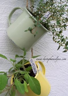 Hanging Coffee Cup Herb Garden