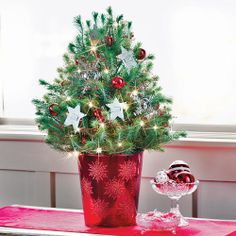 Believe Italian Stone Pine Christmas Tree - his living Pine will refresh the spirit with its simple, timeless beauty. This product is no longer available, however click the image to see this year's Holiday Trees!