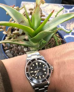REPOST!!!  My #1680 having a go at a #watchesandsucculents 👍🏻😎🤠 #rolexsubmariner #submariner#vintage#vintagerolex #rolex #patina#rolexgmt#watches#watchporn#rolexpassion#watchesofinstagram #vintage #wristshot#patina#watchfam#hodinkee##vintagewatch#rolexaddict#watchgeek#wristporn#wristshot#vintagerolexforum#instagood#picoftheday#photooftheday#friends#instadaily#follow#like4likes  repost | credit: ID @mattedialdoc (Instagram)