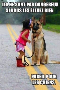 Wicked Training Your German Shepherd Dog Ideas. Mind Blowing Training Your German Shepherd Dog Ideas. Funny Animal Pictures, Funny Animals, Cute Animals, Random Pictures, Funniest Pictures, Dog Pictures, Baby Animals, Funny Dogs, Funny Memes